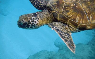 Aloha Oahu – Sommer Sonne Beach
