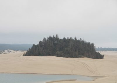 Dune forest florence
