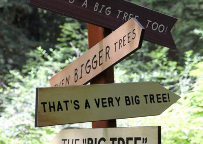 Redwood big tree signs
