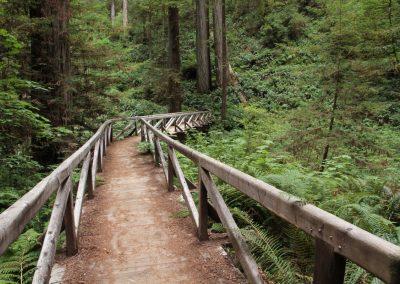 walk way Redwoods